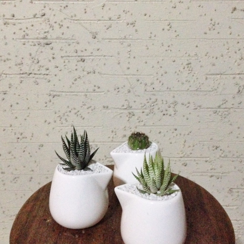 Succulents in varied containers!  Take your pick!